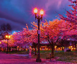 pink, light, and tree image