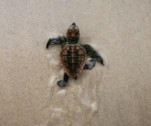 turtle, animal, and beach image