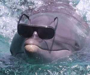 dolphin, aesthetic, and funny image