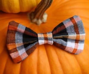 bow tie, Halloween, and pumpkin image