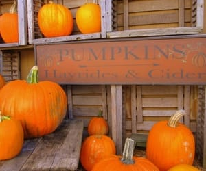 Halloween and pumpkin patch image