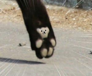 animal, bear, and cat image