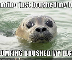 lolcats and lol seal image
