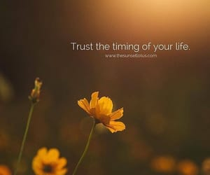 life, live, and trust image