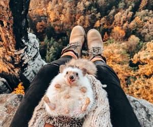 autumn, animal, and fall image