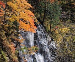 akita, autumn, and japan image