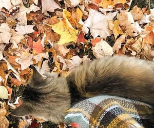autumn, cat, and colors image