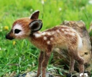 animal, baby, and deer image