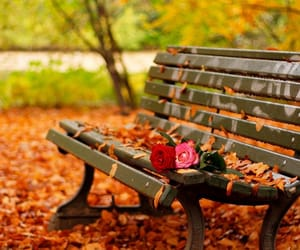 autumn, rose, and leaves image