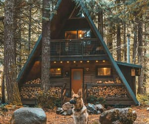 forest, dog, and house image