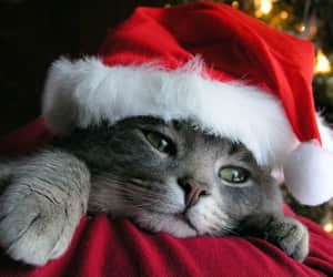 cats and christmas image