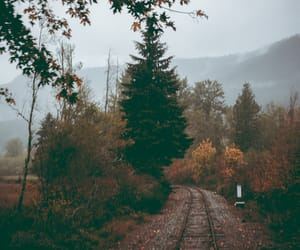 aesthetic, autumn, and tumblr image