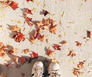 adidas, autumn, and fall image