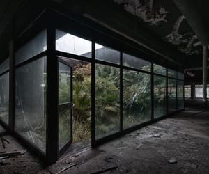 abandoned, dark, and plants image