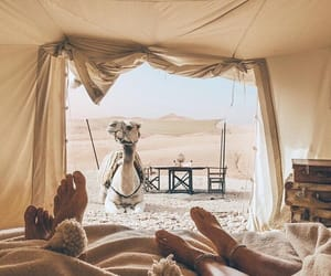 camel, travel, and desert image