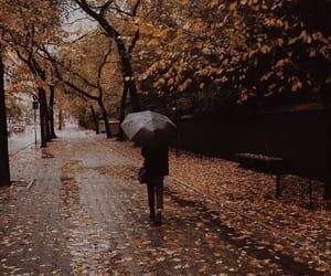 rain, fall, and autumn image