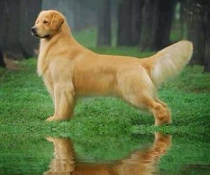 Animales, belleza, and perro image