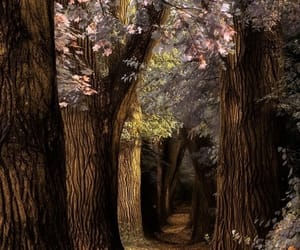 fairytale and woods image