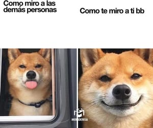 dogs and perrito image
