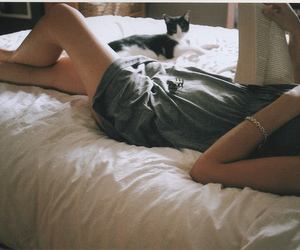bed, kitty, and book image