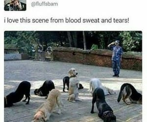 dog, funny, and bts image