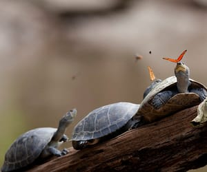 butterfly, turtle, and photography image