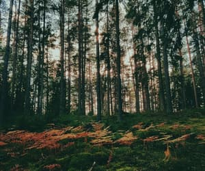 autumn, colourful, and world image