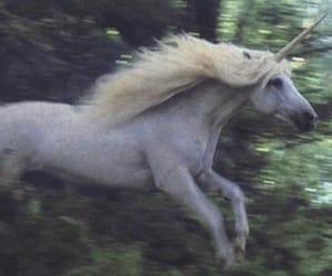 unicorn, magic, and horse image