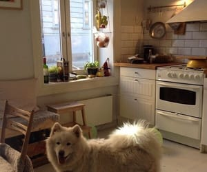dog and home image