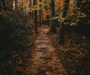 nature, autumn, and woods image