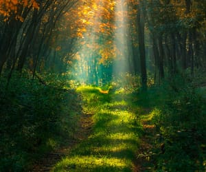 autumn, nature, and woods image