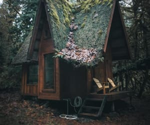 woods and off the grid image