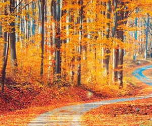 color, road, and otoño image