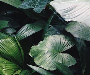 jungle and greenaddict image