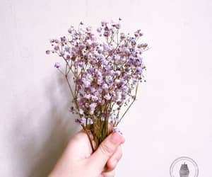 photography, white walls, and pretty flowers image