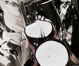 coconut, theme, and summer image