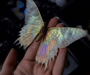 butterfly, grunge, and aesthetic image