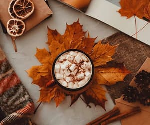 autumn, leaves, and cozy image