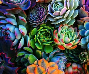 succulents, plants, and colorful image
