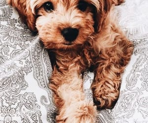 aesthetic, puppy, and animals image