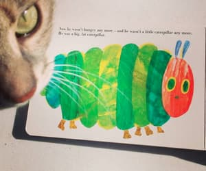 caterpillar, cats, and storybooks image