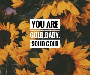 quotes, sunflower, and wallpaper image