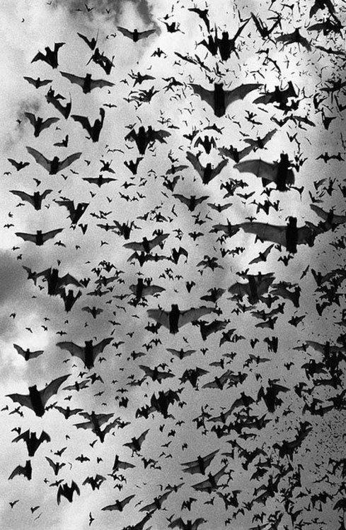 Bats Bats Oh More Bats On We Heart It