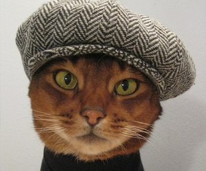 cat and hat image