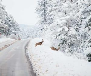 deer, road, and scenery image