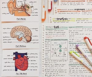 anatomy, art, and college image