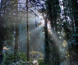 trees, dappled, and forest image