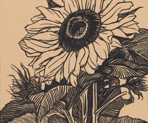 sunflower, girasol, and art image