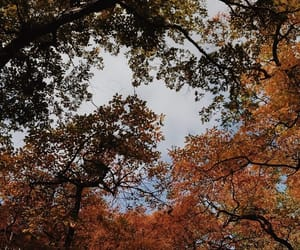 fall, leaves, and trees image