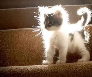 white.cute and electricity.power.cat image